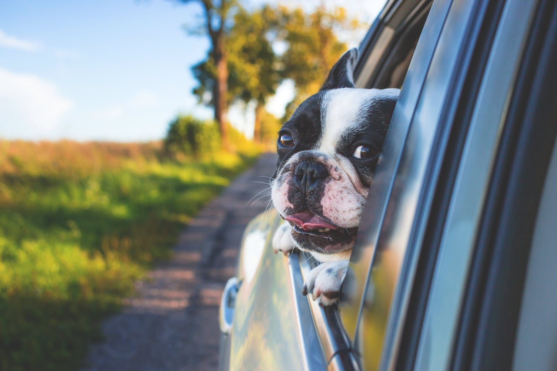 remove dog hair from your car