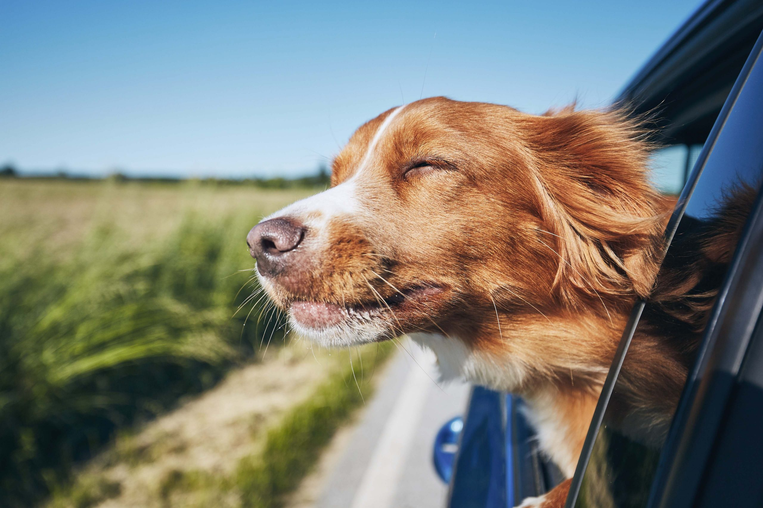 road trip with your dog